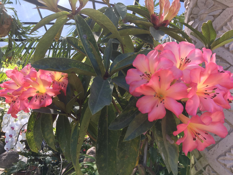 Photo gallery vallarta botanical gardens - Puerto vallarta botanical gardens ...
